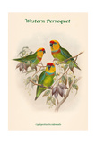 Cyclopsitta Occidentalis - Western Perroquet Posters by John Gould