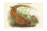 Phasianus Soemmerringii - Soemmerring's Pheasant Prints by John Gould