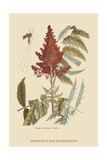 Vespa Ichneumon Tripilis or Fly Pennsylvania Prints by Mark Catesby