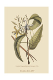 Vanila Plant Posters by Mark Catesby