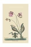 Water Frog Prints by Mark Catesby