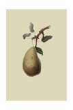 St. Germain Pear Posters by William Hooker