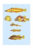 Rarest Curiosities of the Fish of the Indies Poster by Louis Renard