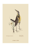 Large Lark Prints by Mark Catesby