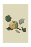 Wormsley Pippin - Apple Prints by William Hooker