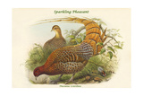 Phasianus Scintillans - Sparkling Pheasant Prints by John Gould