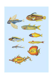 Rarest Curiosities of the Fish of the Indies Print by Louis Renard