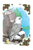 Christmas Snow Owl Art by Sara Pierce