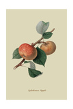 Sykehouse Apple Prints by William Hooker