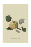 Wormsley Pippin - Apple Posters by William Hooker