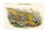 Phasianus Reevesii - Reeve's Pheasant Posters by John Gould