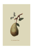 St. Germain Pear Prints by William Hooker