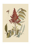 Vespa Ichneumon Tripilis or Fly Pennsylvania Posters by Mark Catesby