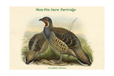 Tetraophasis Obscuras - Mou-Pin Snow Partridge Posters by John Gould