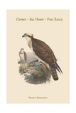 Pandion Haliataetus - Osprey - Sea Hawk - Fish Eagle Prints by John Gould