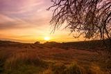 Autumn Lavender Field on Sunset Prints by NejroN Photo