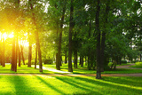 Sunset in Park with Trees and Green Grass Posters by Dudarev Mikhail