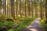 Small Footpath in Forest Photographic Print by Tjarko Evenboer / The Netherlands