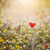 Heart Shaped Poppy Photographic Print by Julia Davila-Lampe