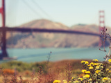 Wildflowers with Golden Gate Bridge Photographic Print by Liz Rusby