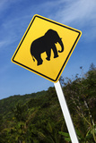 Elephant Road Warning Sign Photographic Print by Richard Taylor