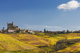 Nebbiolo and Dolcetto Vineyards, Serralunga D'alba Photographic Print by Massimo Ripani
