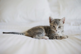 Kitten Photographic Print by Cindy Loughridge