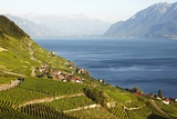 Views of Vineyards and Lake Geneva at Epesses, Lavaux Photographic Print by Richard Taylor