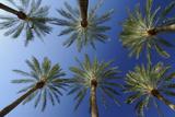 Palmen Fotografie-Druck von Raimund Linke