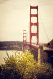 Golden State Photographic Print by  Danip