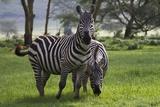 Nakuru, Rift Valley, Kenya Photographic Print by Aldo Pavan/SOPA RF