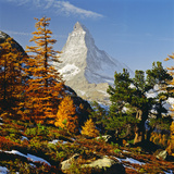 Autumnal Wood and Matterhorn in the Background Photographic Print