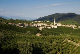 Guia Locality, View of the Vineyards and the Village Photographic Print by Aldo Pavan