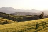 Hills near Mt San Vicino, Cupramontana Photographic Print by Maurizio Rellini