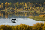Bull Moose in Grand Teton NP Photographic Print by Russell Burden