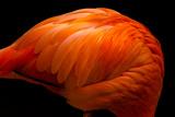 Flamingo Vermilion Photographic Print by Akihiro Takemasa