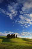 Cypresses Grove, Orcia Valley Photographic Print by Maurizio Rellini