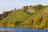 Vineyards along Neckar River in Stuttgart Photographic Print by Werner Dieterich