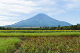 The Flower of Mt Fuji and Autumn Photographic Print by Yuji Takahashi
