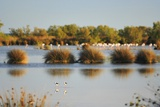 Herons in the Camargue Area Photographic Print by Riccardo Spila/SOPA RF