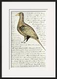 Sketch by William Clark of Cock of the Plains in the Lewis and Clark Expedition Diary Framed Giclee Print