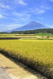 Rice Ears and Mount Fuji Photographic Print by  SHOSEI/Aflo