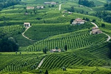 Santo Stefano Locality, View of Vineyards of Follo, Valdobbiadene Photographic Print by Aldo Pavan