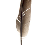 One Feather Photographic Print by Bernard Jaubert