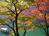 Colored Leaves Photographic Print by Datacraft Co Ltd