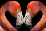 Kissing Flamingos Photographic Print by Dean Fikar