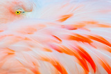 Flamingo Photographic Print by Tom Winstead