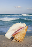 Mexico, Quintana Roo, Yucatan, Cancun, Shell on Beach Photographic Print by Bryan Mullennix