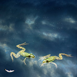 Frogs Photographic Print by Christiana Stawski