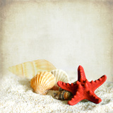 Little Treasures from Sea Photographic Print